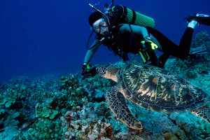 Top Dive Spots in Micronesia