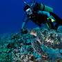 5 Steps to Diving on Guam