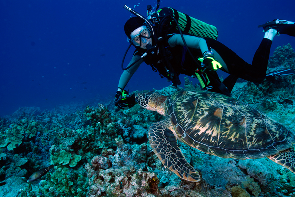 Turtle in Micronesia