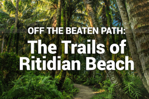 Off the Beaten Path: The Trails of Ritidian Beach