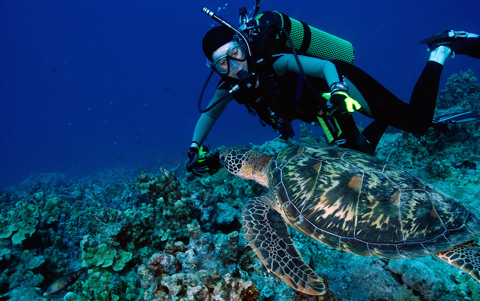 5 Steps To Diving On Guam The Guam Guide