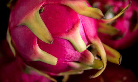 Dragonfruit from Farm to Table Guam