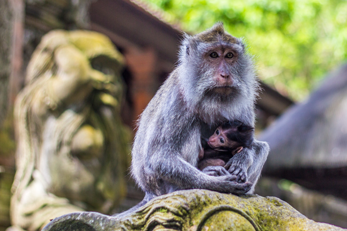 monkey-forest-mom-baby-temple-H