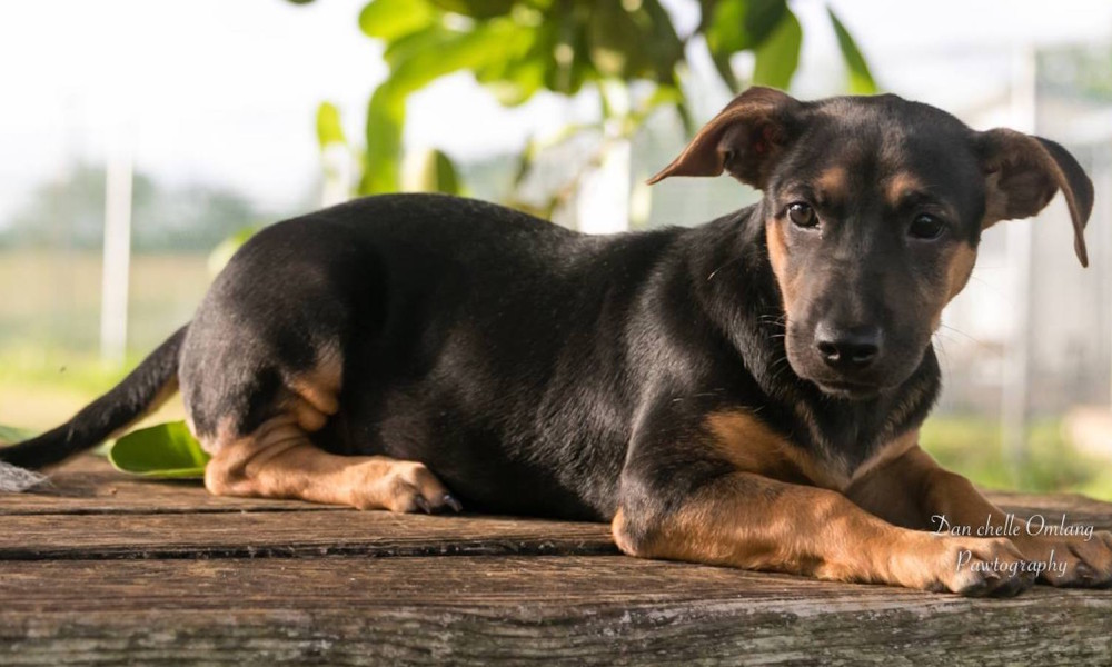 Puppy-friendly Places in Guam: Man's Best Friend Welcome
