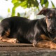 Dan Chelle Omlang Dog Pawtography Photo Guam