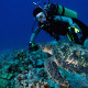 Diver Sea Turtle Guam