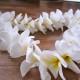 Plumeria Leis Guam Fresh Factor