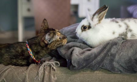 Cat and rabbit on couch
