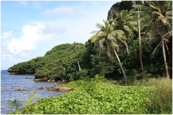 Trees Talofofo Bay Guam