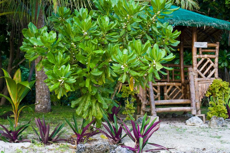 Huts Fai Fai Beach Guam