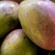 Farm to Table Guam Mangos